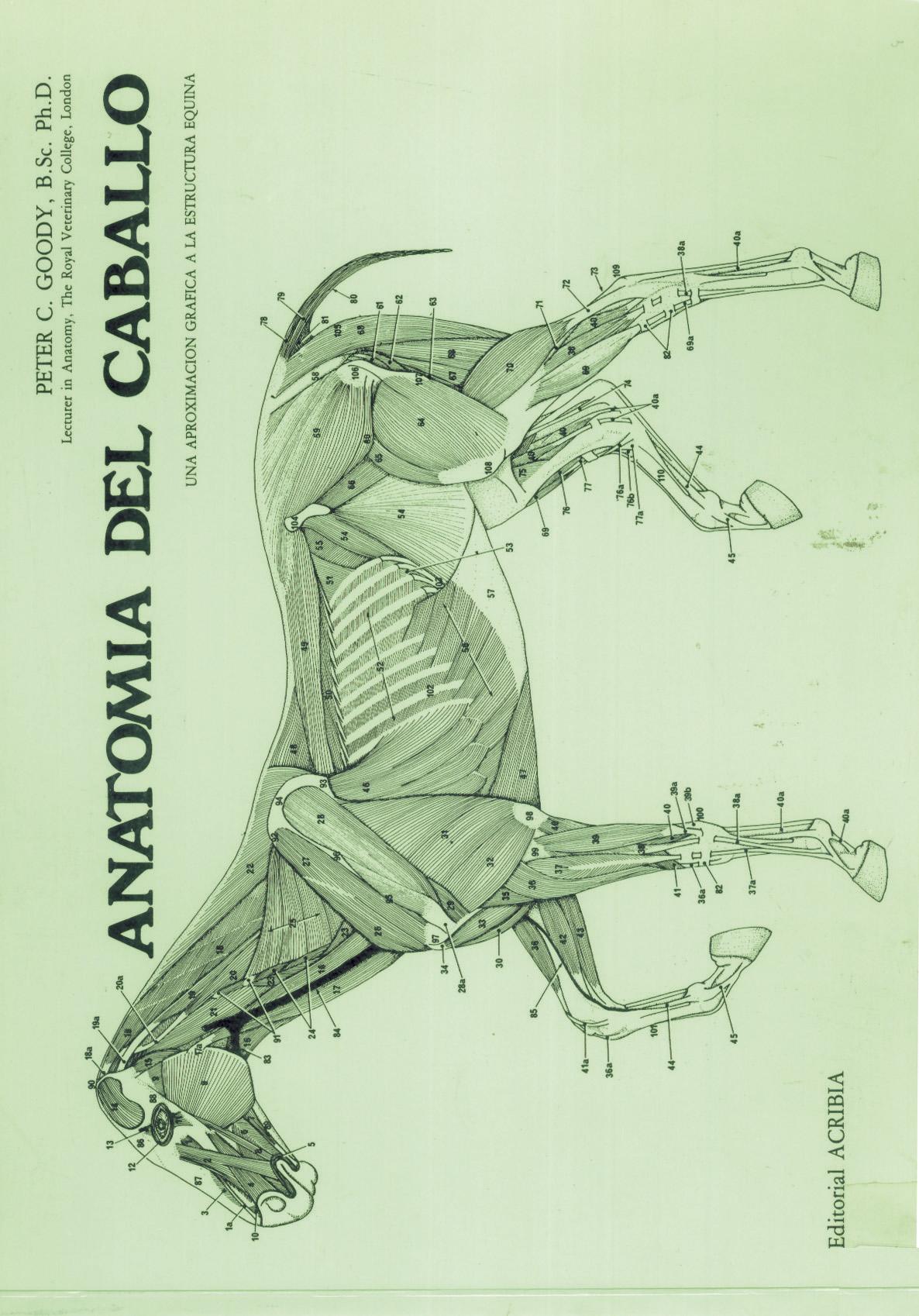 Anatomía del caballo - Editorial Acribia, S.A.
